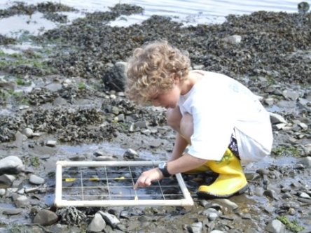 Photo Credit: Great Bay Discovery Center